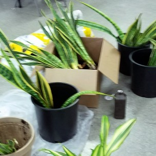 plants_divided2