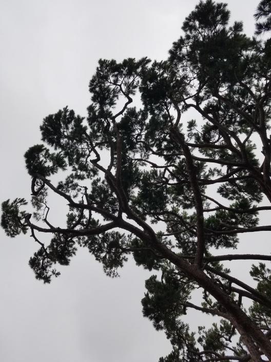 tree_shadow